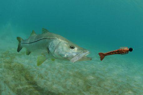 Vacanza per pescatori a Cuba