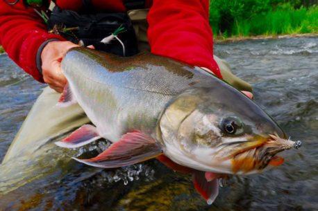 viaggio di pesca in Alaska