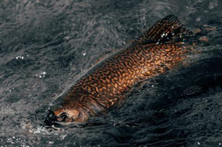 Viaggio di pesca in Nuova Zelanda