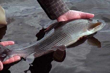 Vacanza di pesca in Lapponia