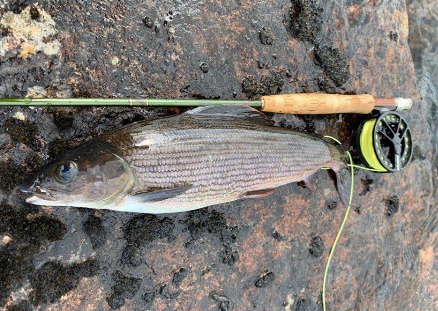 vacanza di pesca Svezia