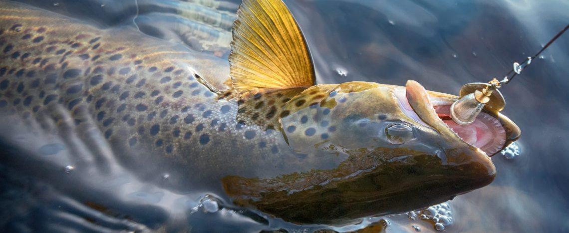 pesca in Lapponia