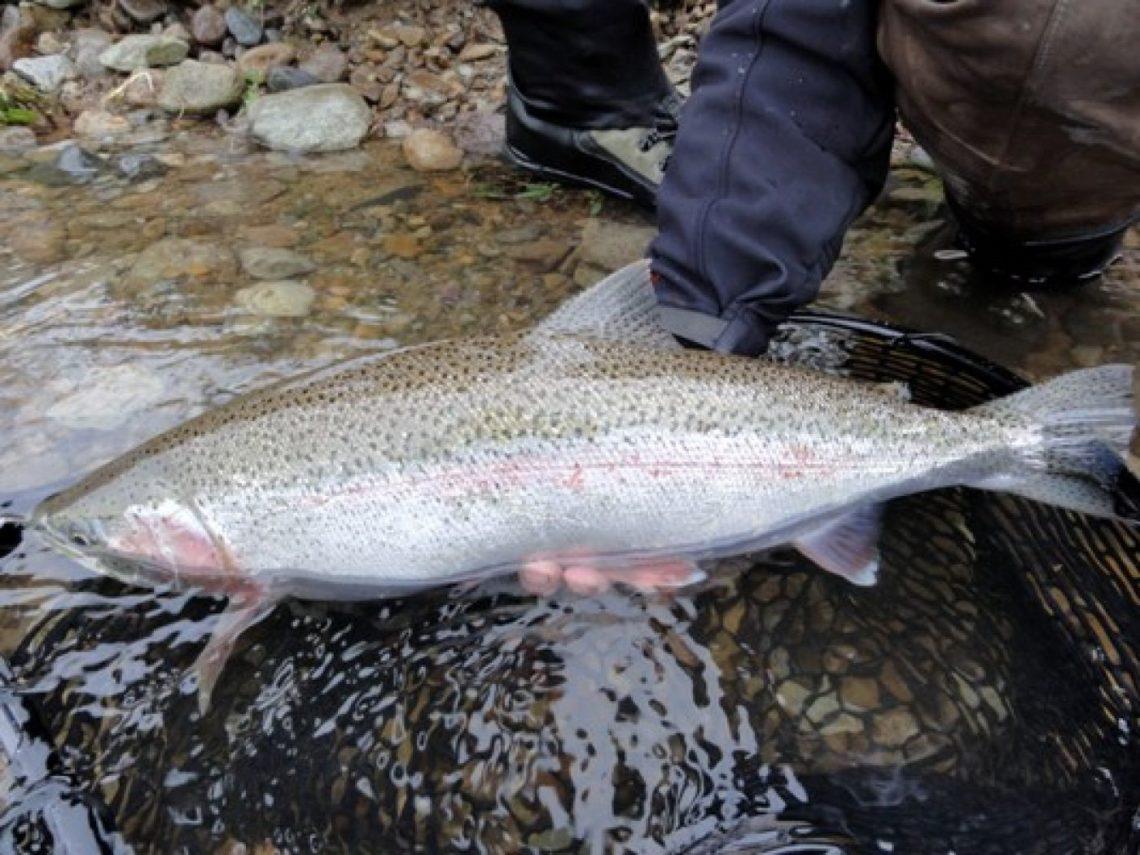 Viaggio di pesca alla trota in Alaska