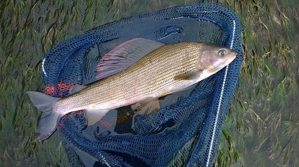 viaggio di pesca in trentino con Simone Beuzer