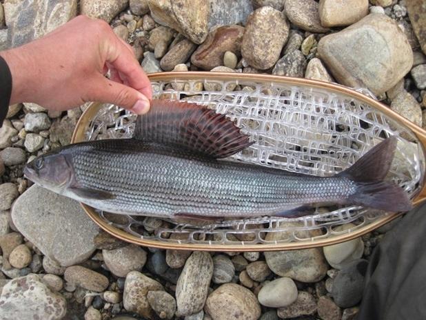 Viaggio di pesca in Finlandia